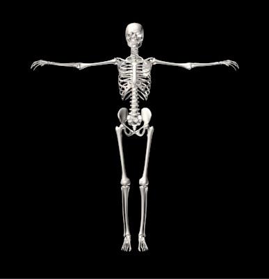 دانلود پروژه طراحی اسکلت کامل انسان (3)