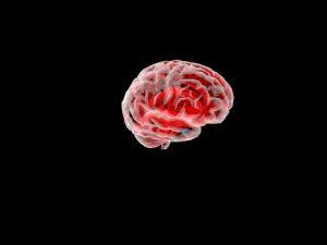 دانلود پروژه طراحی مغز انسان