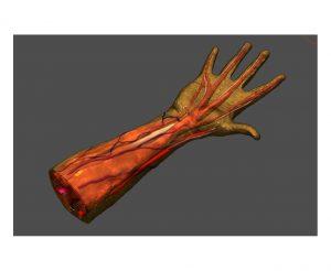 دانلود پروژه طراحی مدل آناتومی دست (مولاژ)