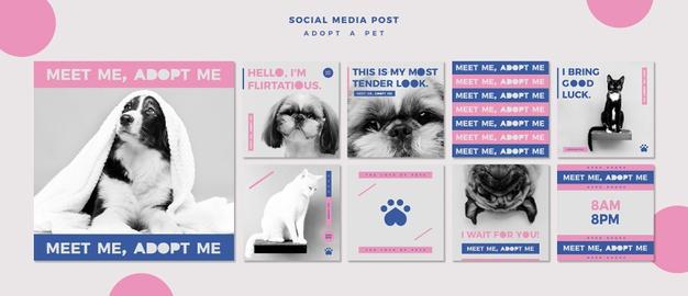 دانلود پروژه طراحی قالب لایه باز پست اینستاگرام حیوان خانگی