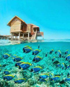 دانلود پروژه عکاسی طبیعت جزیره واکارو مالدیو