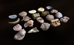 دانلود پروژه طراحی انواع فسیل آبزیان دریایی