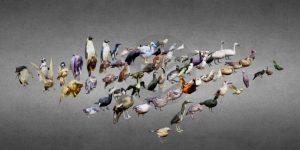 دانلود پروژه طراحی انواع پرنده سه بعدی لوپولی